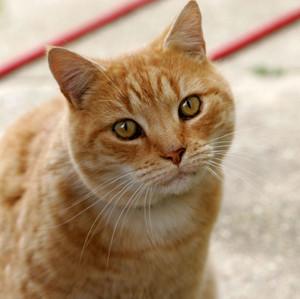 Cat031